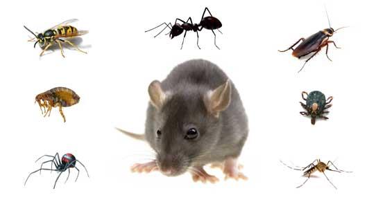 Pest animal